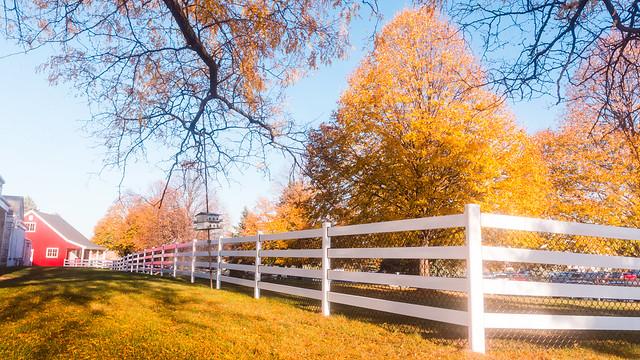 Sun Glistens on Fence Line Corner