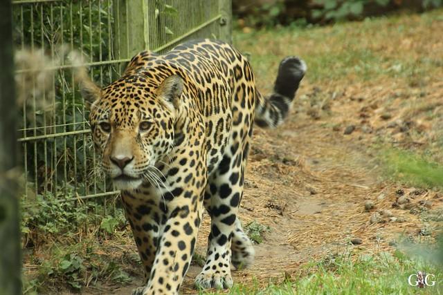 Zoo Rostock 02.10.201674