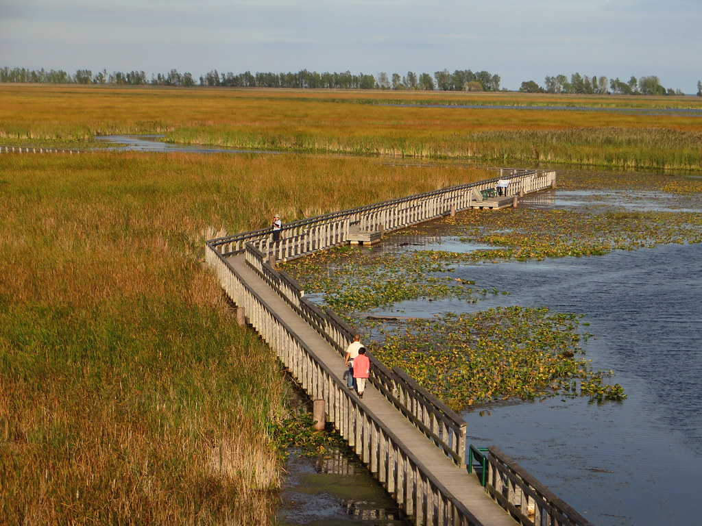 Marsh Boardwalk, Point Pelee National Park, Leamington, Ontario, Canada