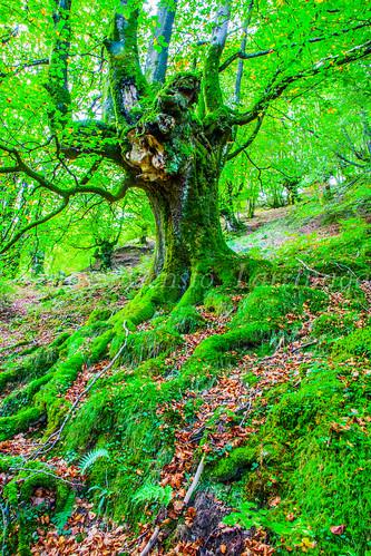 Parque Natural de #Gorbeia #DePaseoConLarri #Flickr      -1367