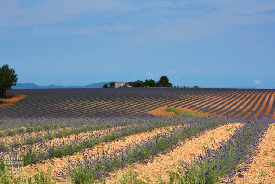 Provence, Plateau de Valensole