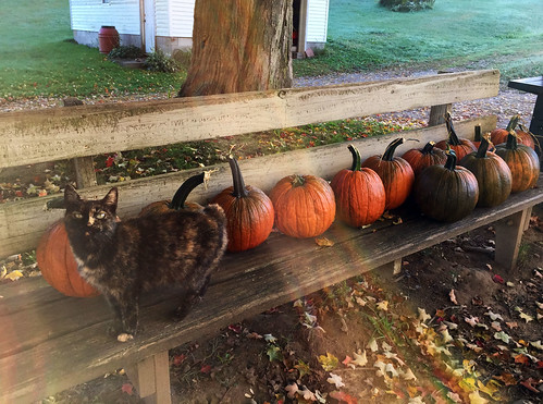 Rico the Nubbin and my surprise pumpkins
