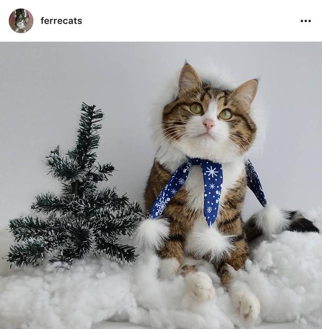Cat christmas costume