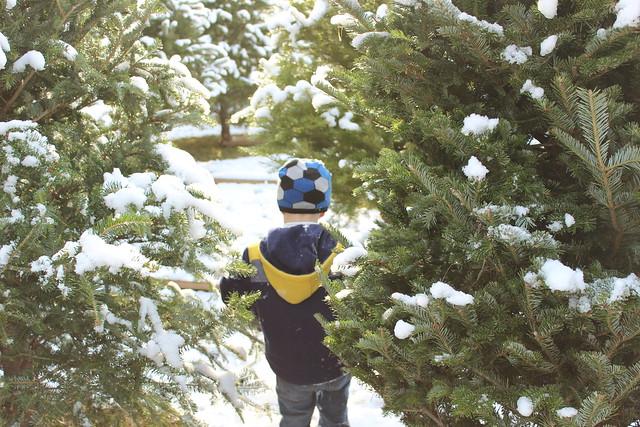 snowballs 023