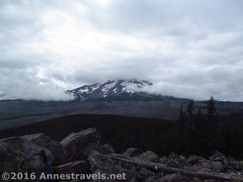 The view of Mt. Hood from Owl Point, Mount Hood National Forest, Oregon