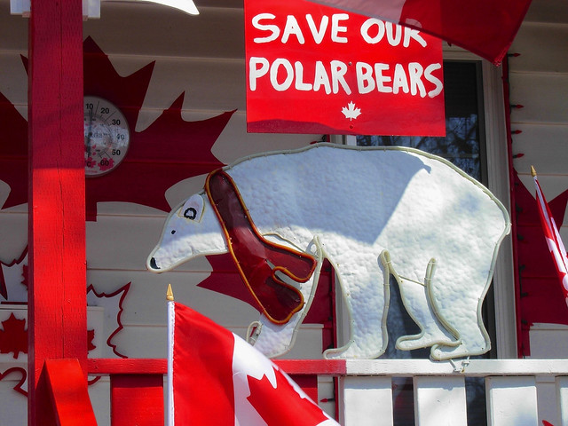 Photo of Polar Bear Political Statement