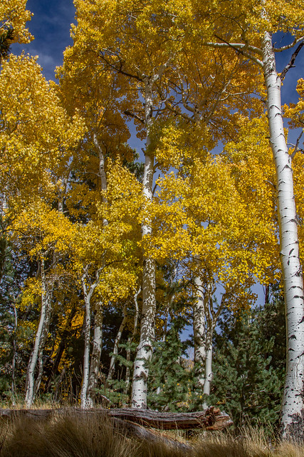 Aspen Nature Trail: Arizona Snowbowl