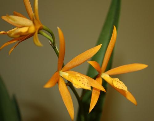 bpl_golden_flowers