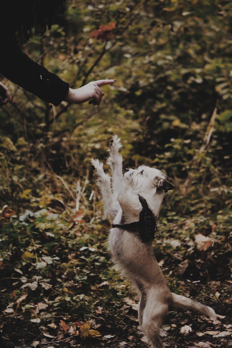 Hundeshooting (6)