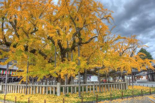 Hongan-ji Temple (West od Ryukoku) at Kyoto on NOV 28, 2016 vol01 (10)