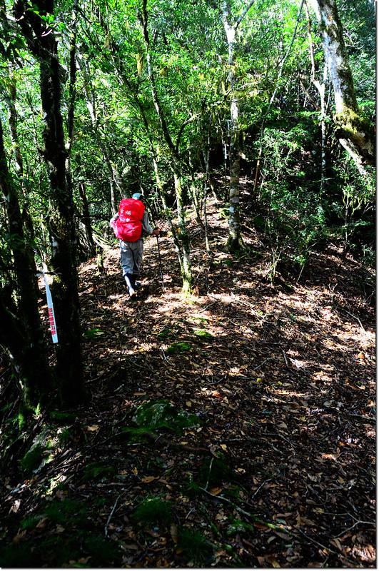 焦土山登山路徑瘦稜路段 1