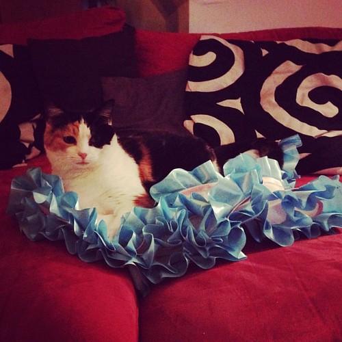 "Well my little ""helper"" enjoys the newly made skirt 😻 #catstagram #cosplaycat #calicocat #cat #cosplaywip"
