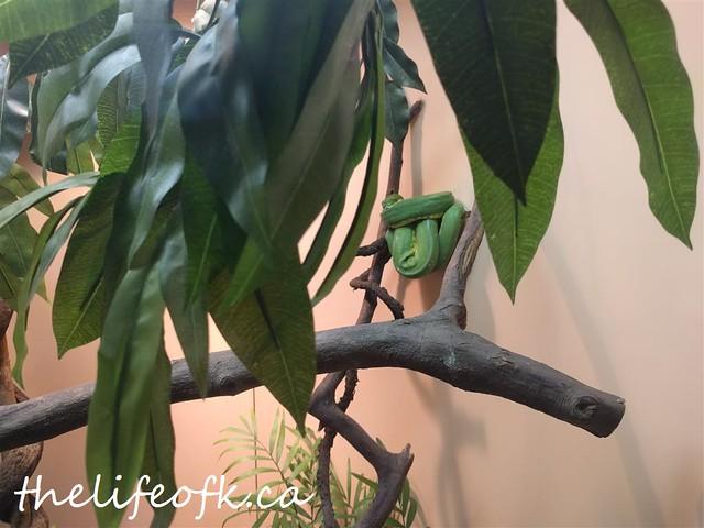 Reptiles_4