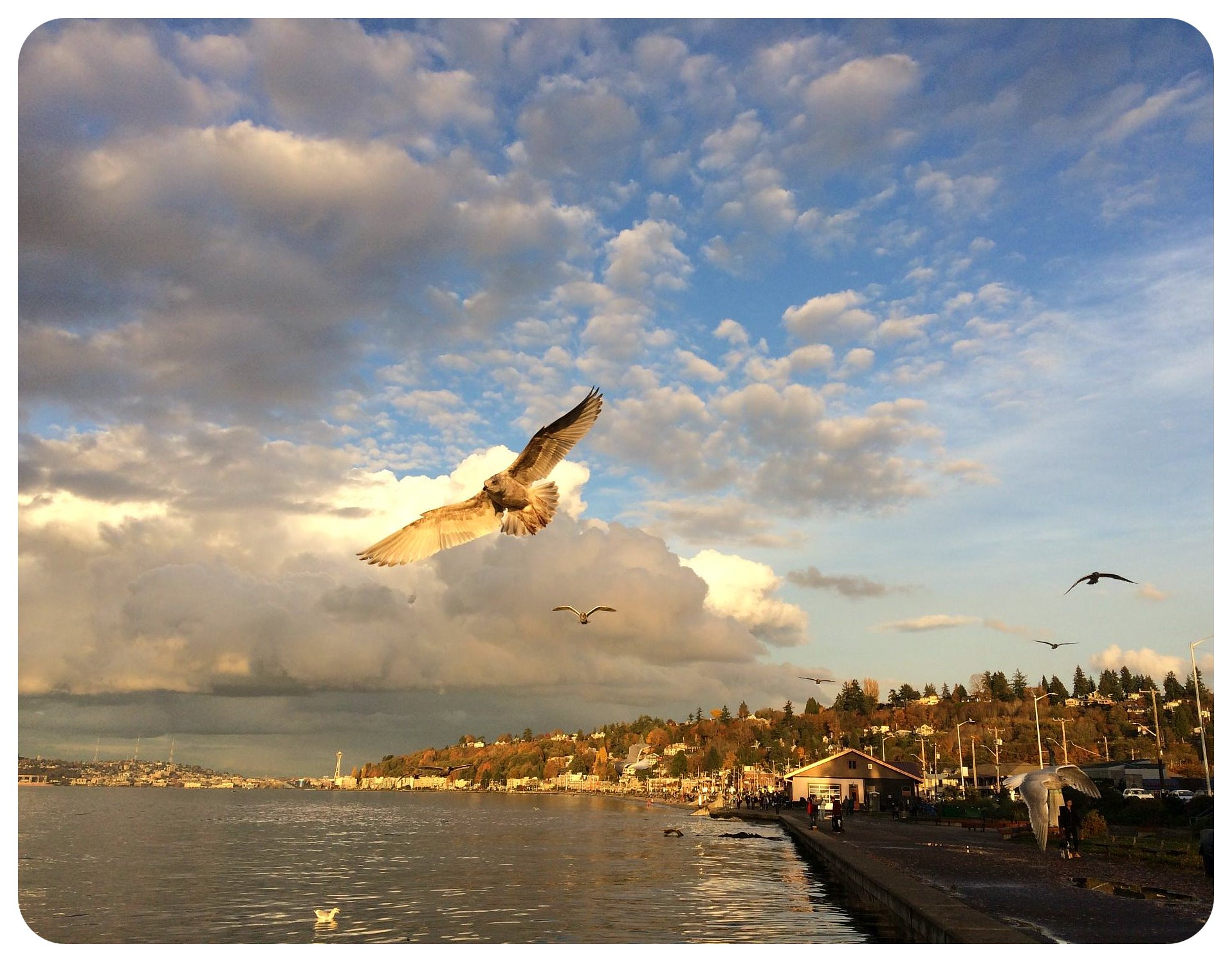 seattle alki beach sunset