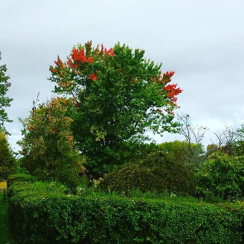 Fall is taking hold #KnoxFarm #EastAurora #wny #autumn