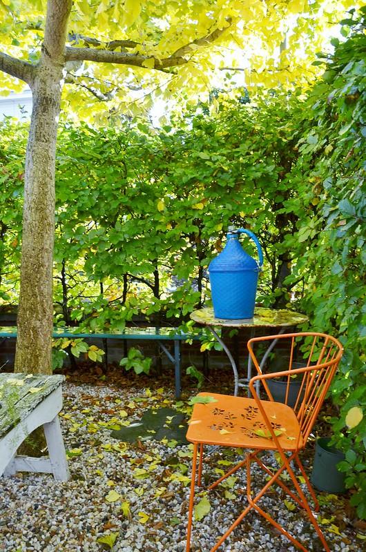 ginkgo in the frontyard