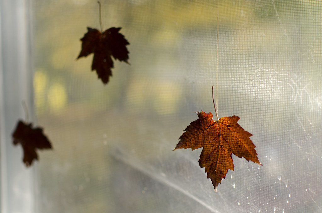 preserving autumn leaves 4