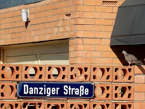 Pigeon on Danziger Strasse