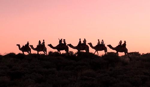 1652e2  Outback camel ride at dawn