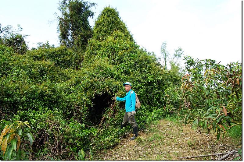 芋匏山果園頂端登山口