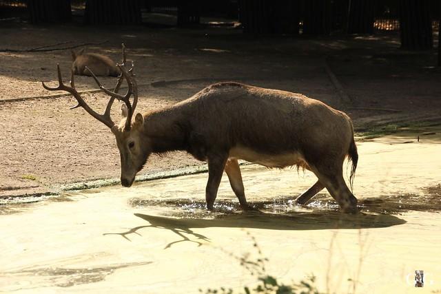 Tierpark Friedrichsfelde 25.09.1664