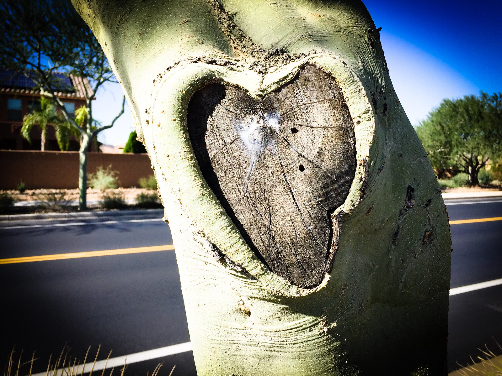Nature's Hearts
