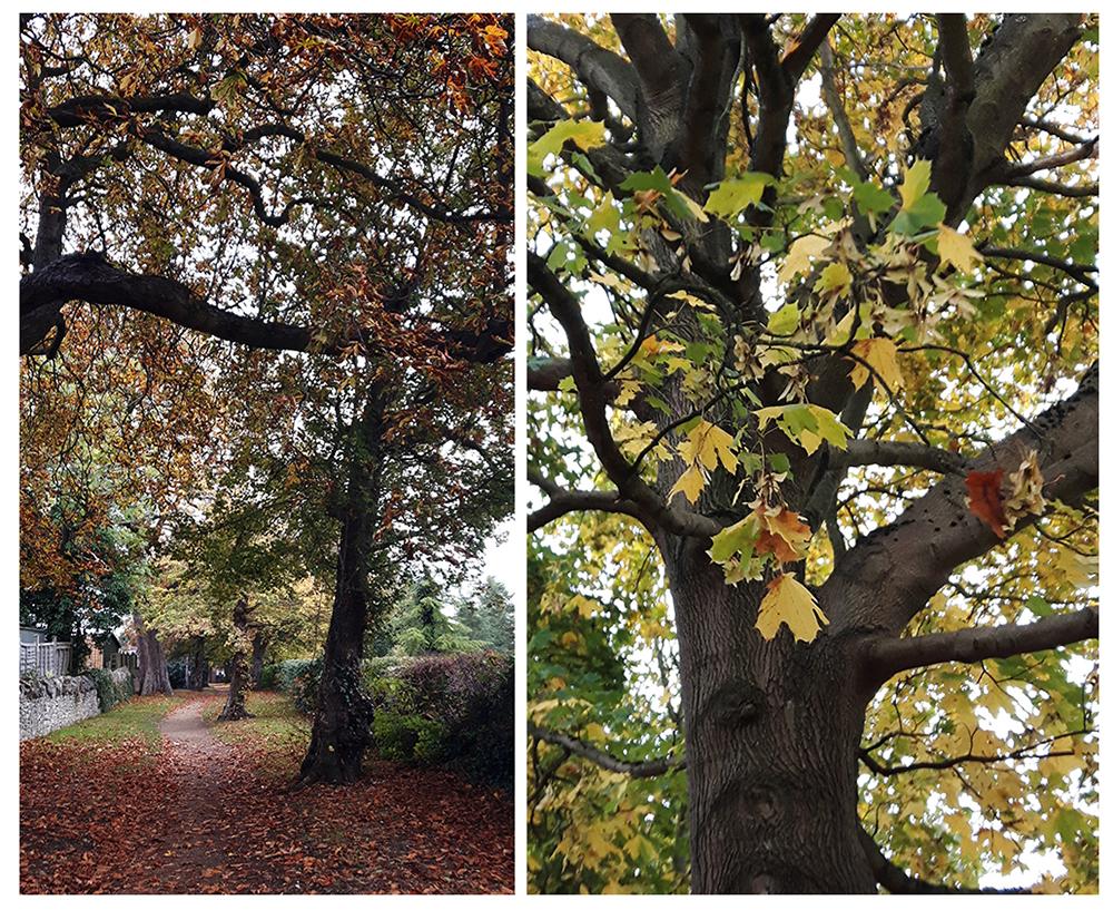 autumn-leaves-trees-park
