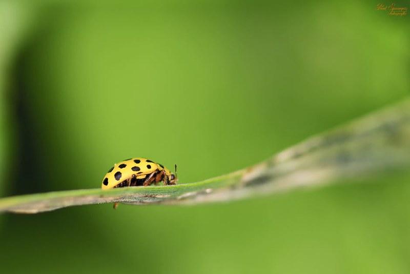 macro-ladybug-bug-yellow-65668