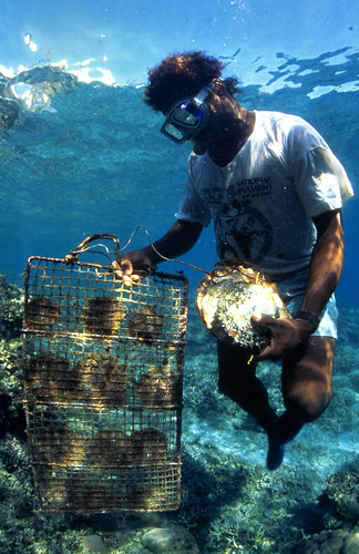 Planting mangroves, Western Province, Solomon Islands. Photo by Mike McCoy, 2001