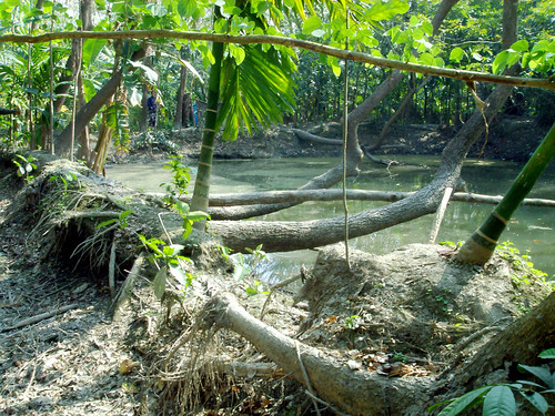 Pond dyke damaged by tidal surge, Bangladesh. Photo by WorldFish, 2002
