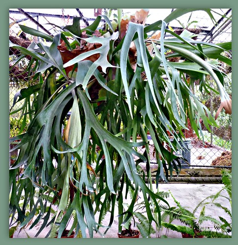 Helecho cacho de venado jardin botanico lankester for Jardin lankester