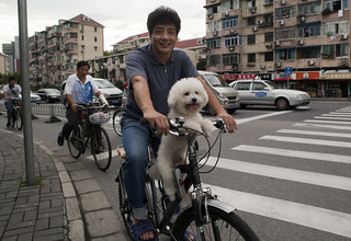 Cycling Poodle | by nataliebehring.com