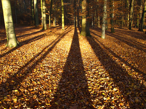 Big shadows in the autumn forest | by Habub3