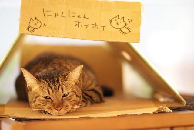Kantaro taking a rest in a box