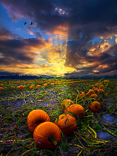 Serenade | by Phil~Koch