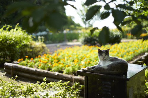 cat and flowers | by rahen z