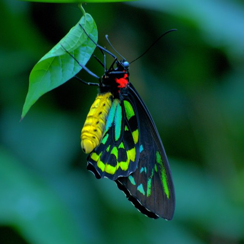 What the caterpillar calls the end of the world, the master calls a butterfly | by StGrundy