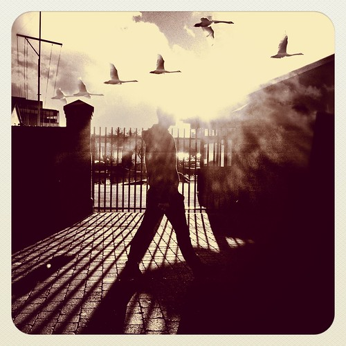 Swans Shadows and Silhouettes | by Skipology