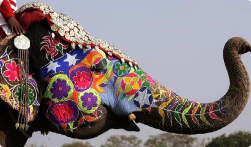 painted elephant | by tavgirl2