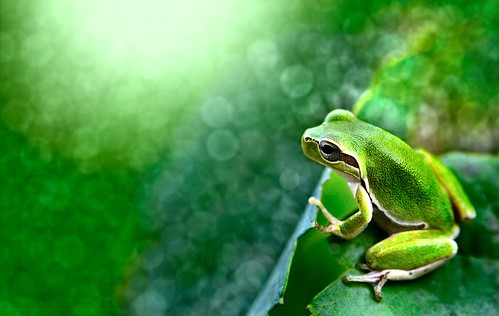 Explore: small frog in a sea of tiny lights....!!! | by Ignazio Corda