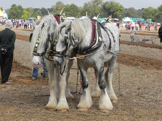 Heavy Horse Ploughing match 2011 | by davidmoldon