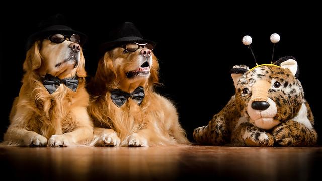 Dogs Rule