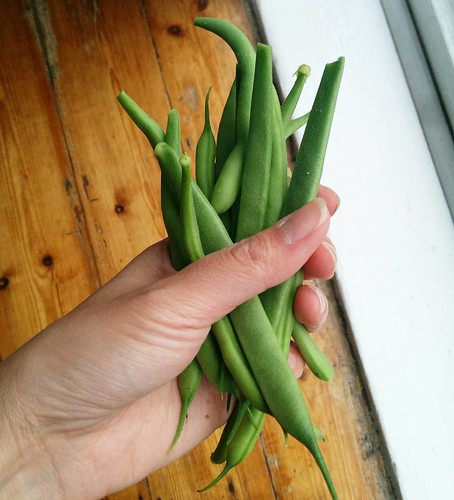 Our first green beans!