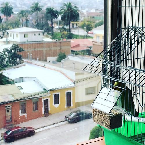 Maga: La catita #Valparaíso #Chile