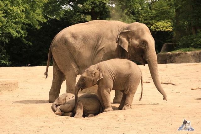 Tierpark Hagenbeck 21.05.2016  095