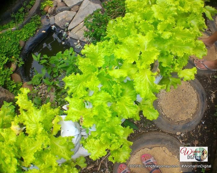 LivingMarjorney-Jaya-Secret-Garden-022