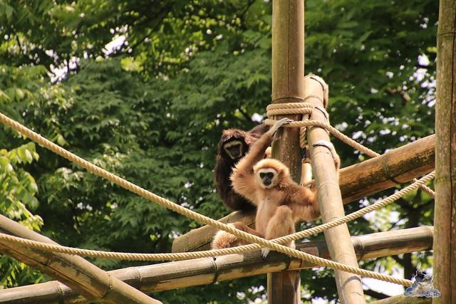 Tierpark Berlin 18.06.2016  066