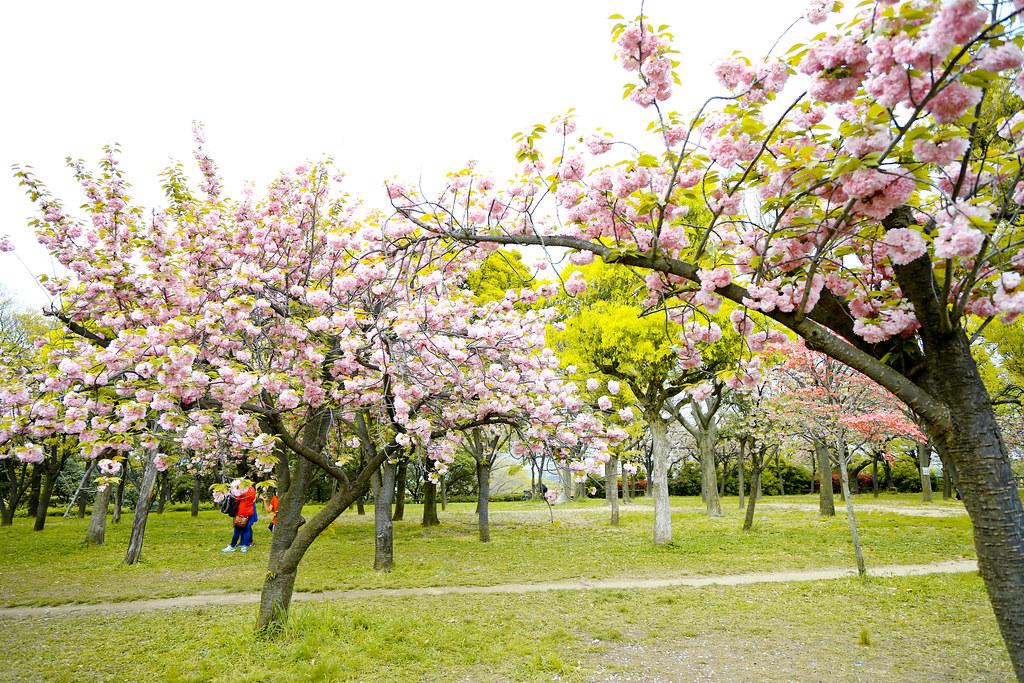 2015 April Kansai 186
