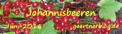 Garten-Koch-Event Juni 2016: Johannisbeeren [30.06.2016]