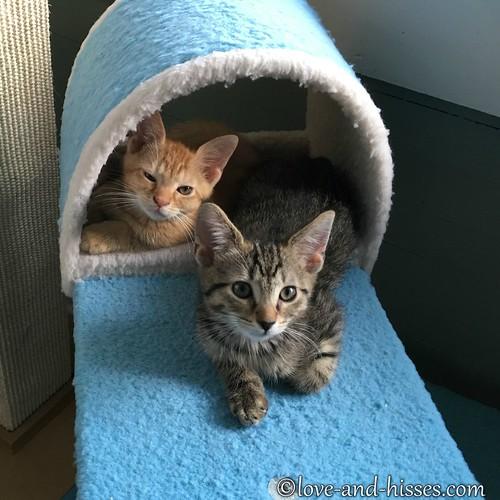 Webster & Felix